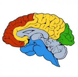 atividade cerebral em 3d
