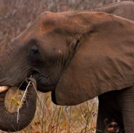 ginastica cerebral para ter memoria de elefante
