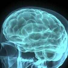 GINÁSTICA CEREBRAL <br/>O cérebro está no foco das pesquisas científicas