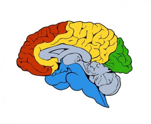 Posição política está relacionada com região do cérebro