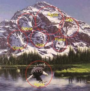 Resposta ilusao de otica aguia