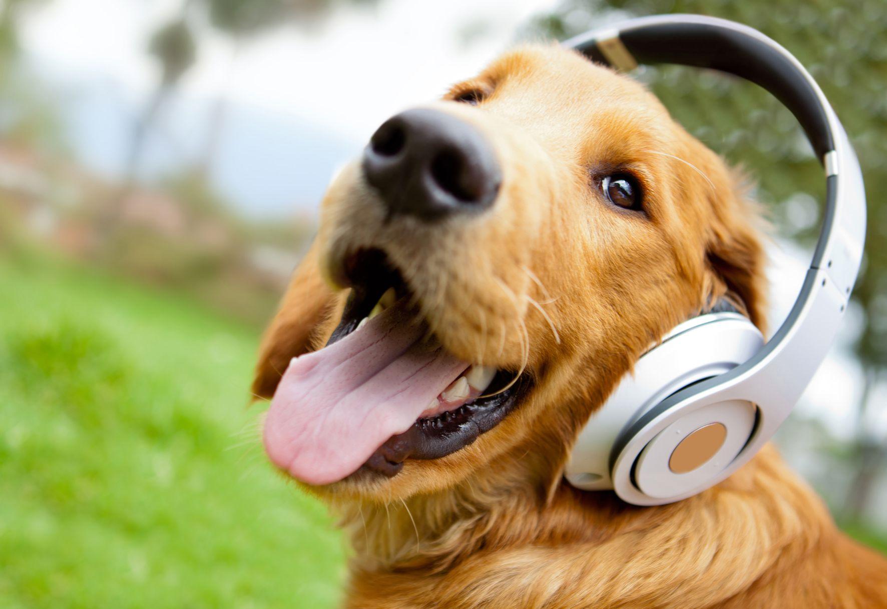 "20 Músicas para ""despertar"" o cérebro"