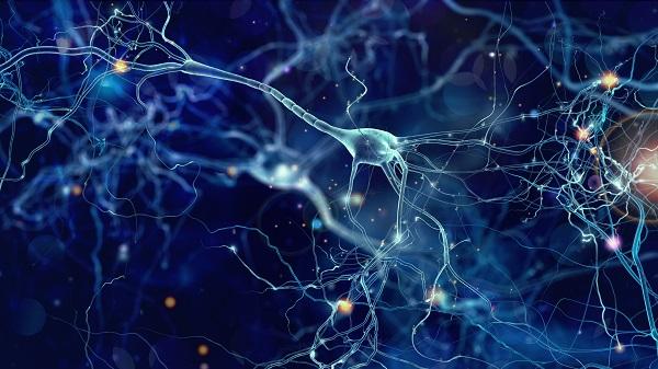 Neuroplasticidade e neurogênese no processo de envelhecimento e em relação à pessoa idosa - SUPERA - Ginástica para o Cérebro