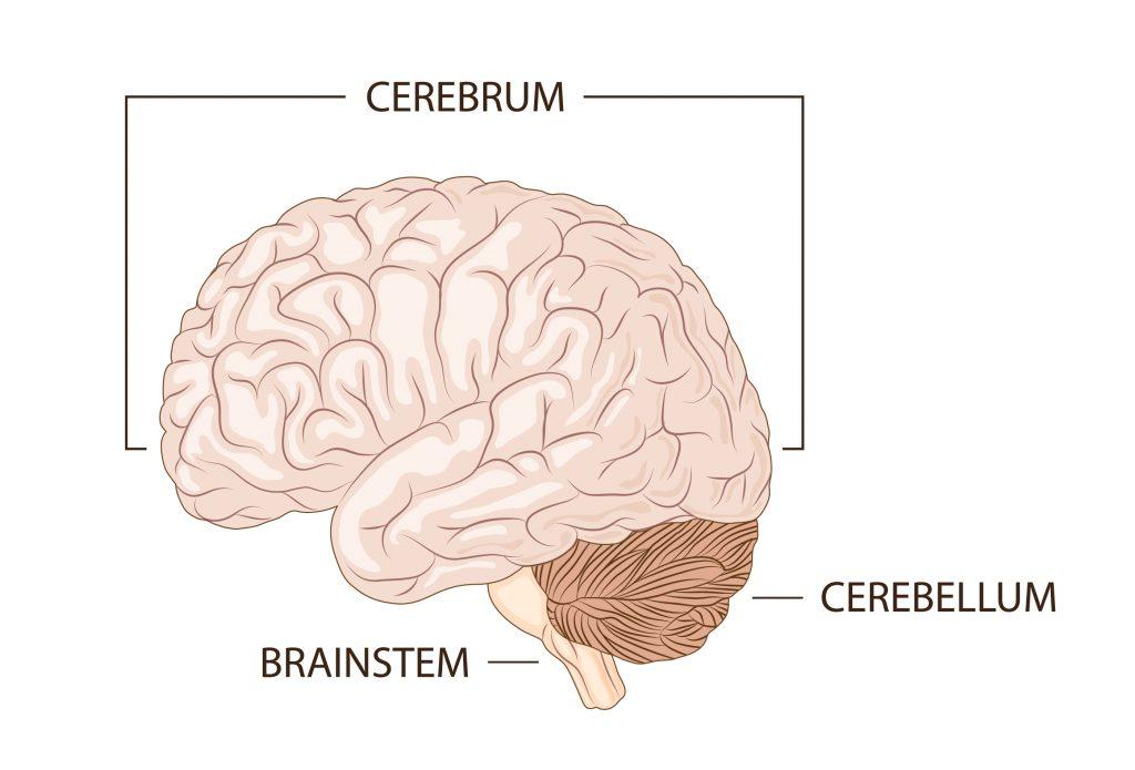 Glossário do cérebro - SUPERA - Ginástica para o Cérebro